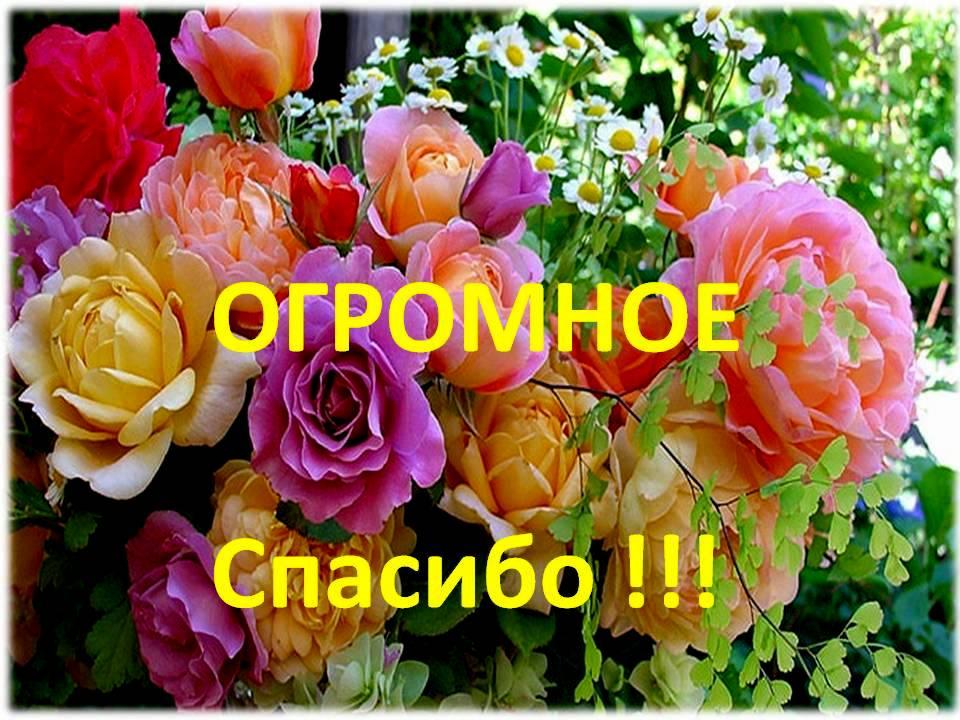 http://alkogolhelp.org/assets/images/otzuvi/spasibo.jpg